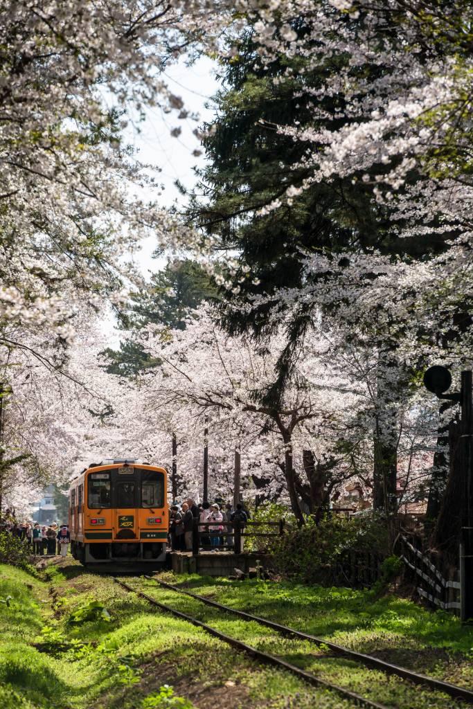2015.04.25芦野公園の桜3