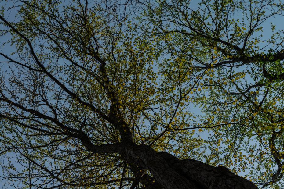 2015.04.29奥入瀬渓流の新緑11