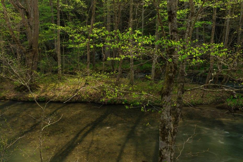 2015.04.29奥入瀬渓流の新緑9
