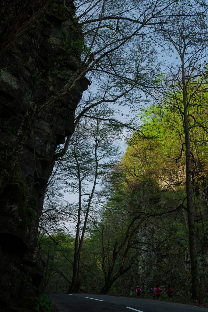 2015.04.29奥入瀬渓流の新緑5