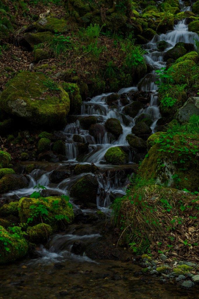 2015.04.29奥入瀬渓流の新緑3
