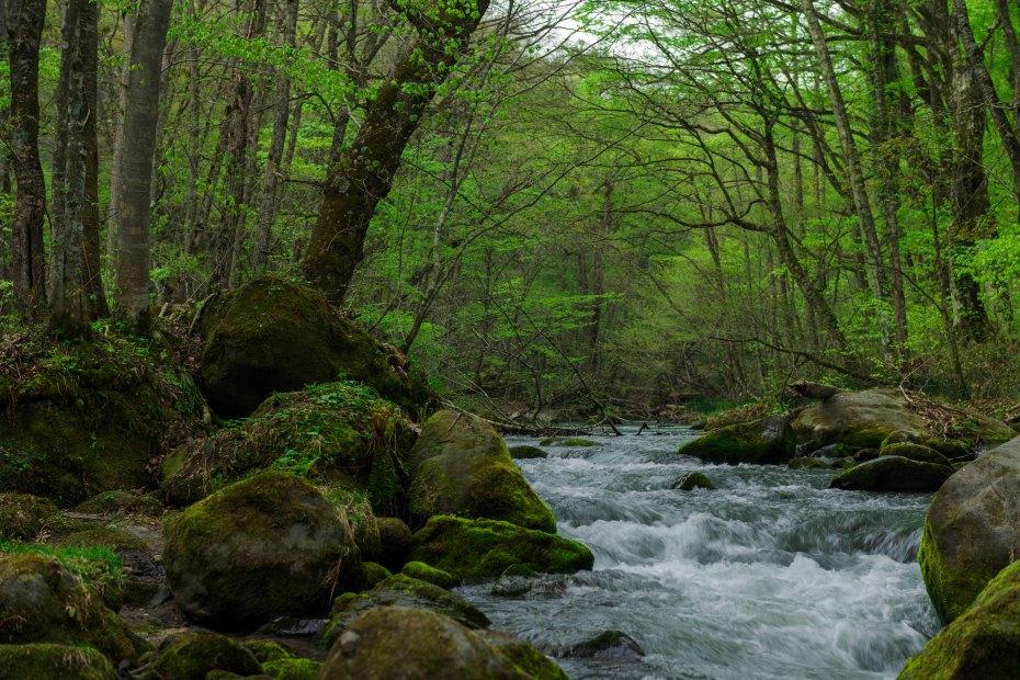 2015.04.29奥入瀬渓流の新緑1