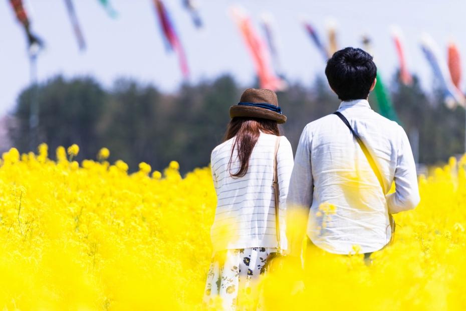 2015.04.30八郎潟の菜の花11