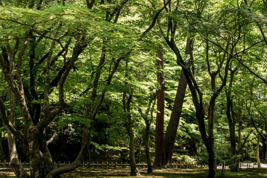 2015.05.10新緑の兼六園9