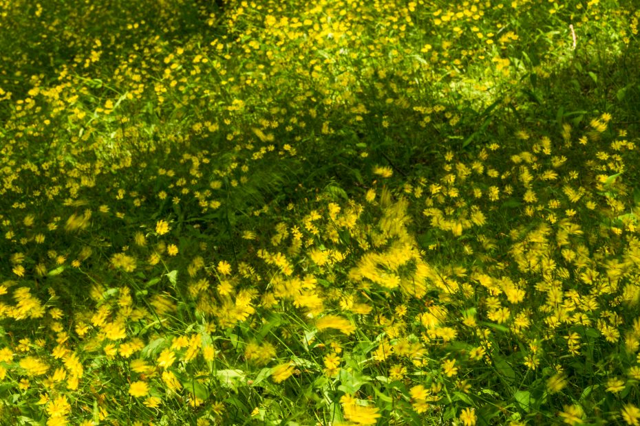 2015.05.15卯辰山の花4