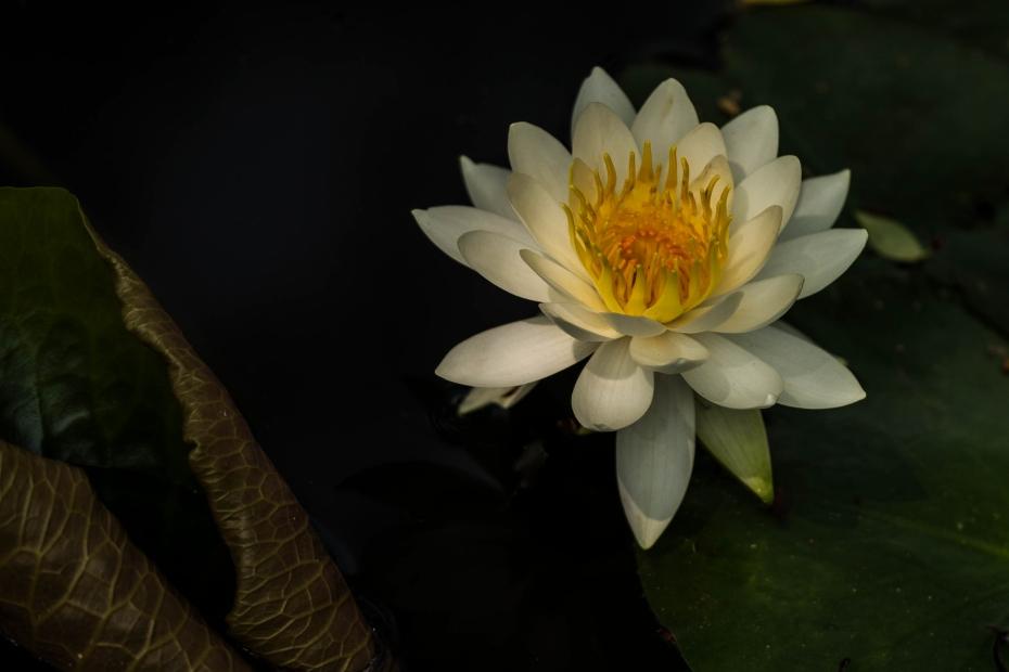2015.05.15卯辰山の花1