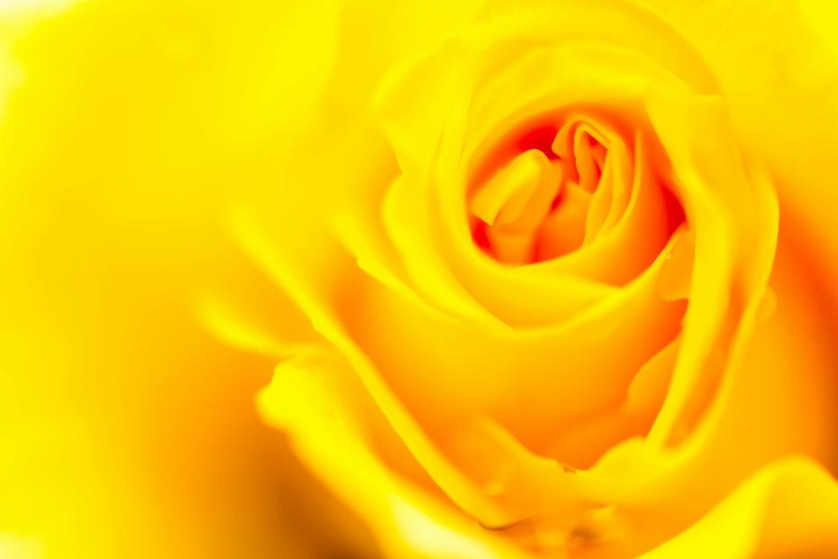2015.05.16姉妹都市公園のバラ1