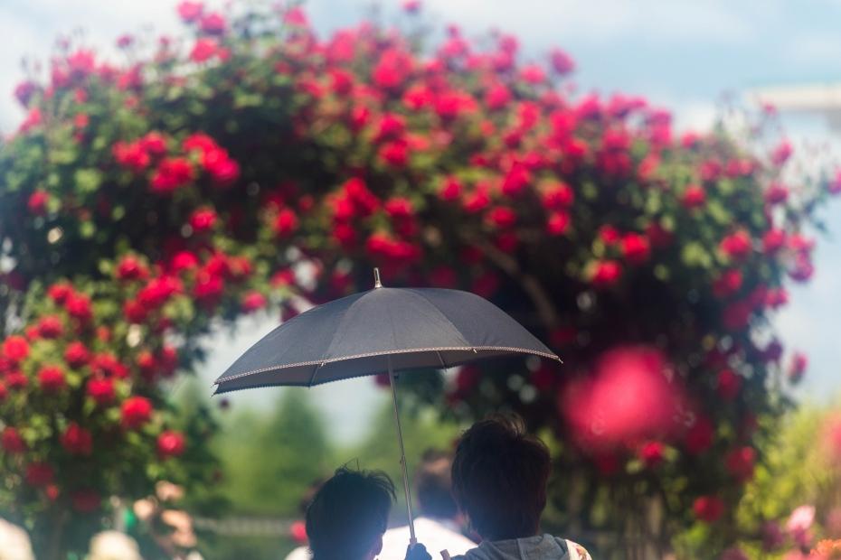 2015.05.21金沢南総合運動公園のバラと日傘1