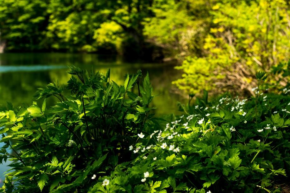 2015.05.24つくばね森林公園展望台と縄ケ池8