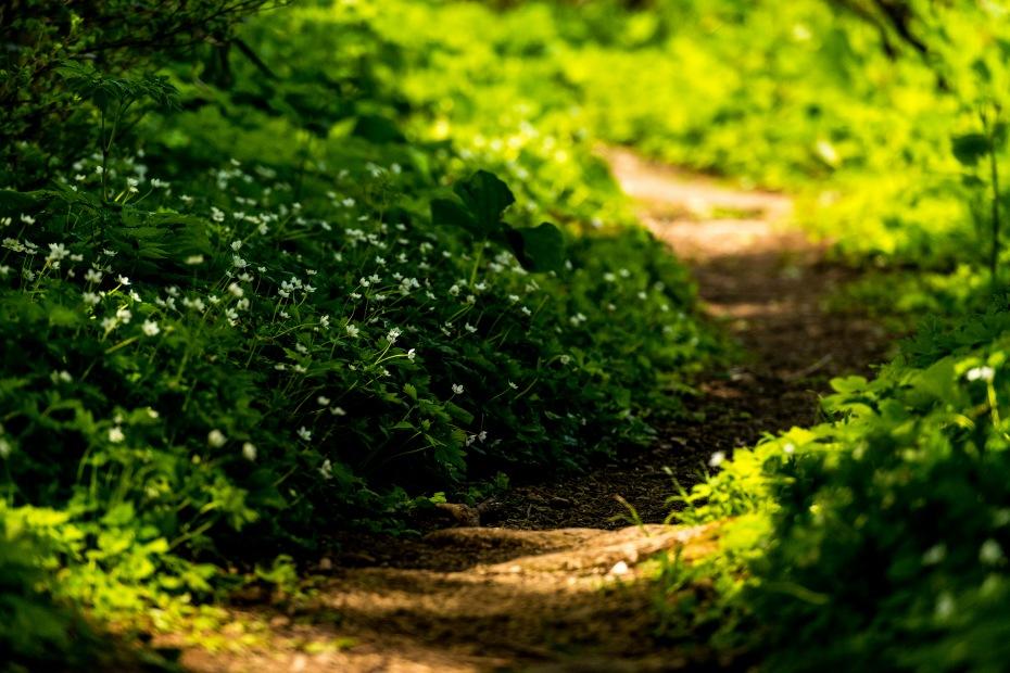 2015.05.24つくばね森林公園展望台と縄ケ池4