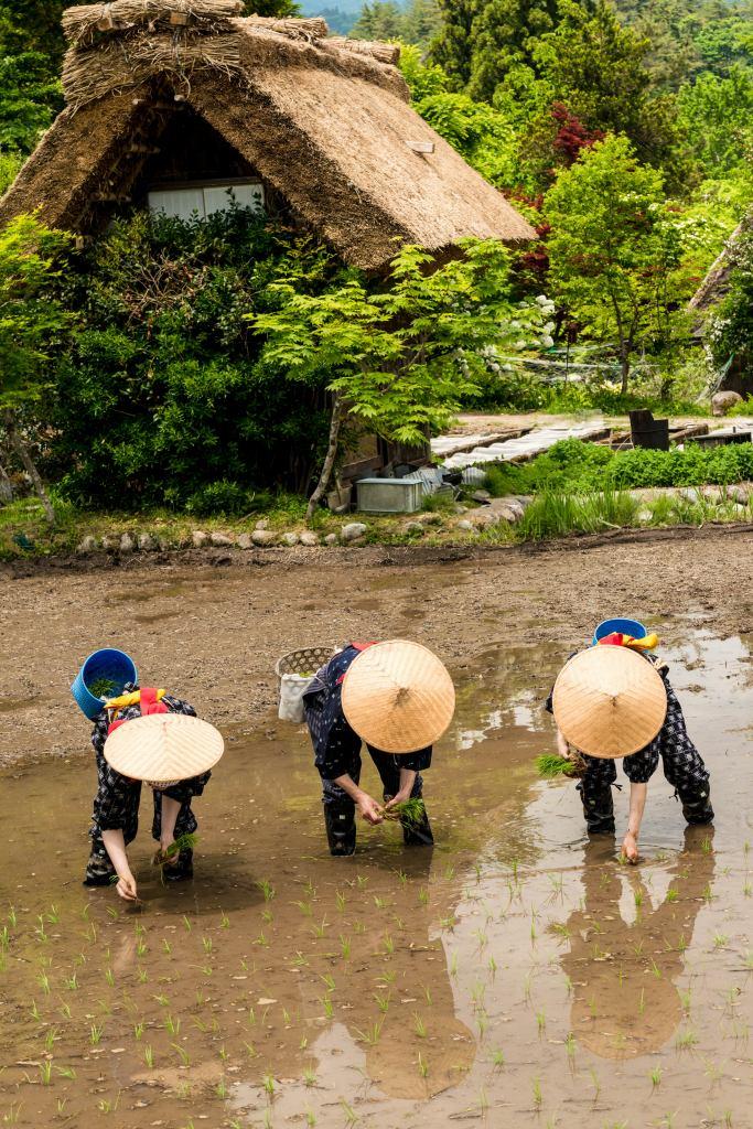 2015.05.25白川郷田植えまつり22
