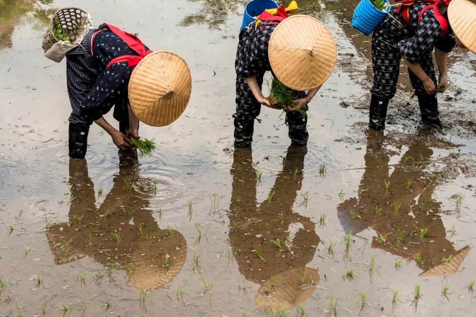 2015.05.25白川郷田植えまつり19