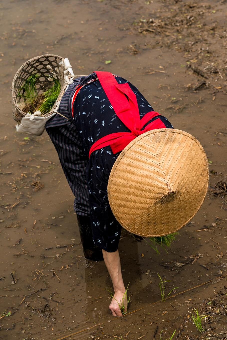 2015.05.25白川郷田植えまつり15