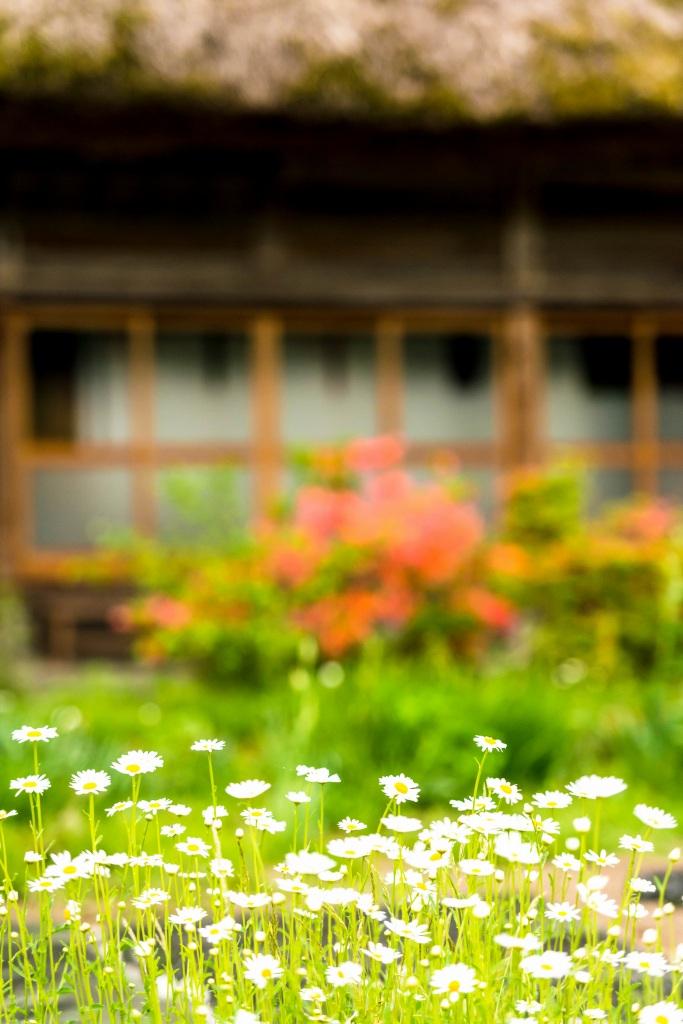 2015.05.25白川郷の田植え時期11