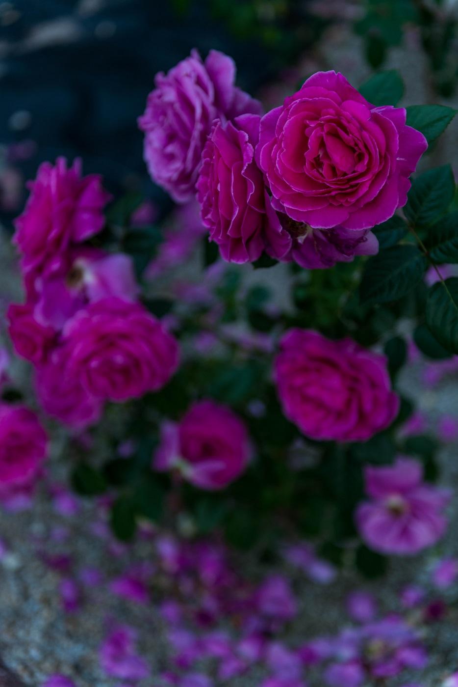 2015.05.29花フェスタ2015ぎふ33
