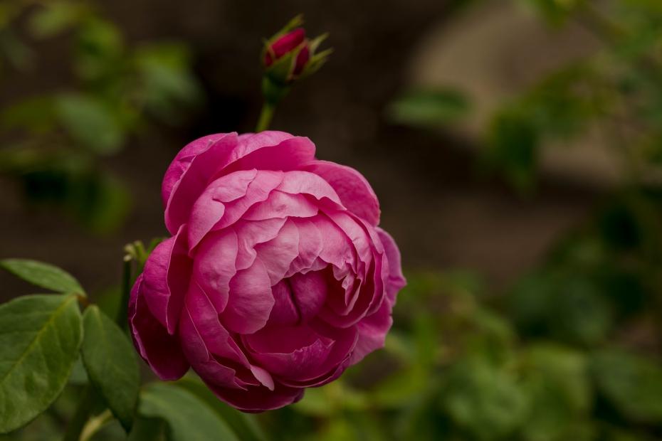 2015.05.29花フェスタ2015ぎふ16