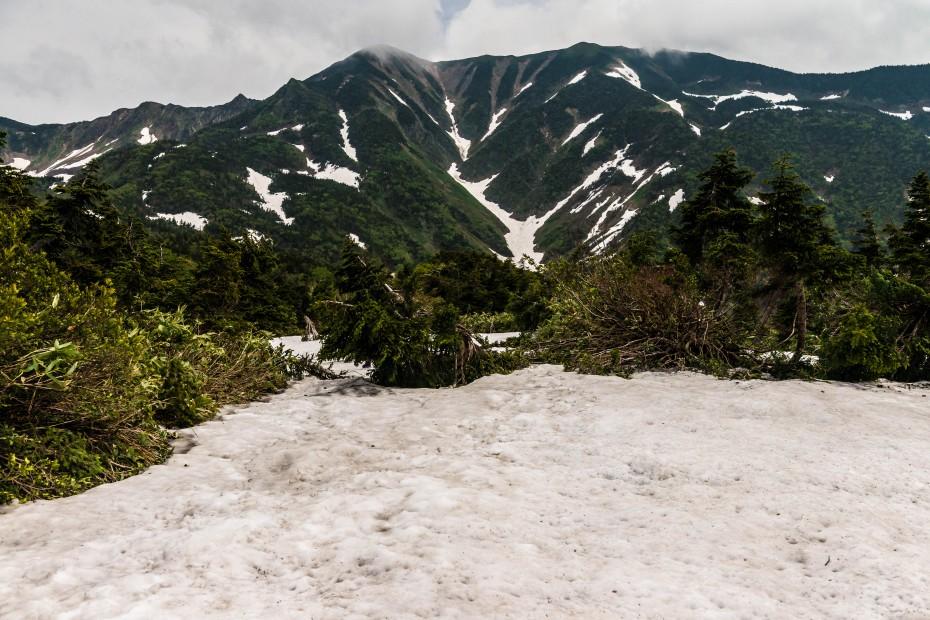 2015.06.11チブリ尾根のブナ原生林と白山眺望29.右は別山2399、左は御舎利山
