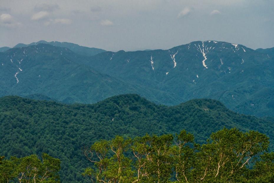2015.06.11チブリ尾根のブナ原生林と白山眺望24.右に大長山、左に赤兎山その奥は荒島岳