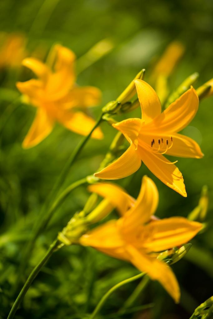 2015.06.13白山高山植物園3