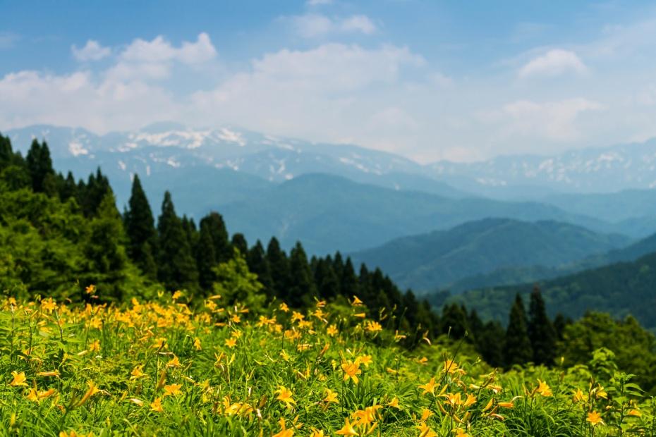 2015.06.13白山高山植物園1