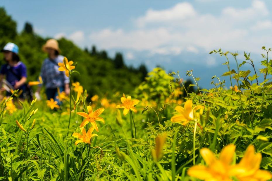 2015.06.13白山高山植物園2