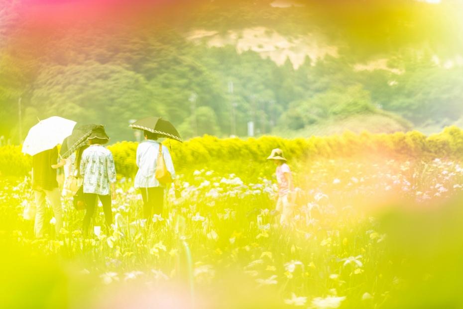 2015.06.15北潟湖畔の花菖蒲7