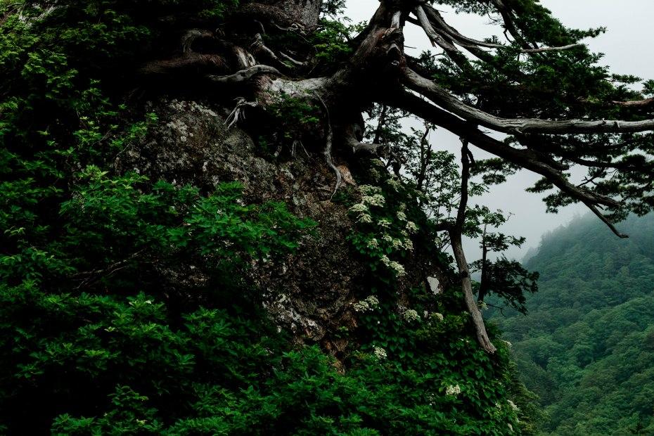 2015.06.17白山白川郷ホワイトロードに雲が湧く10