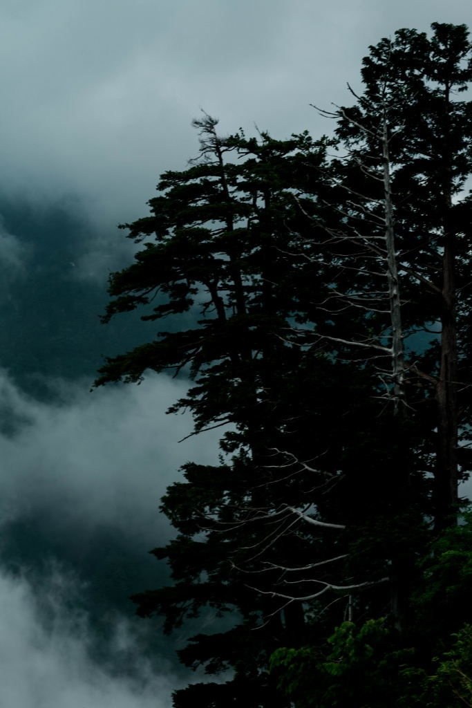 2015.06.17白山白川郷ホワイトロードに雲が湧く8