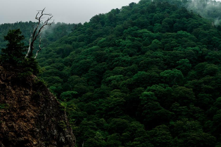 2015.06.17白山白川郷ホワイトロードに雲が湧く9