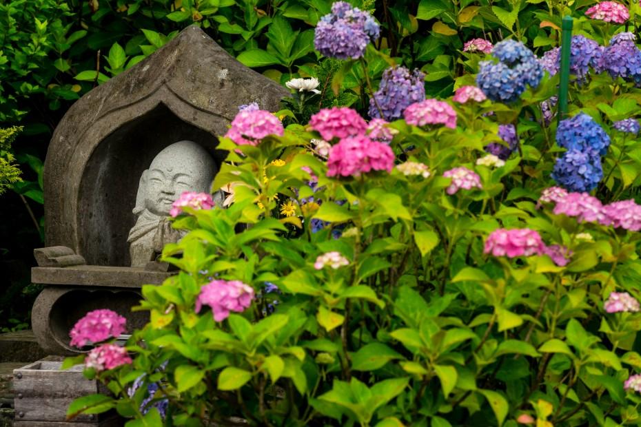 2015.06.20紫陽花1