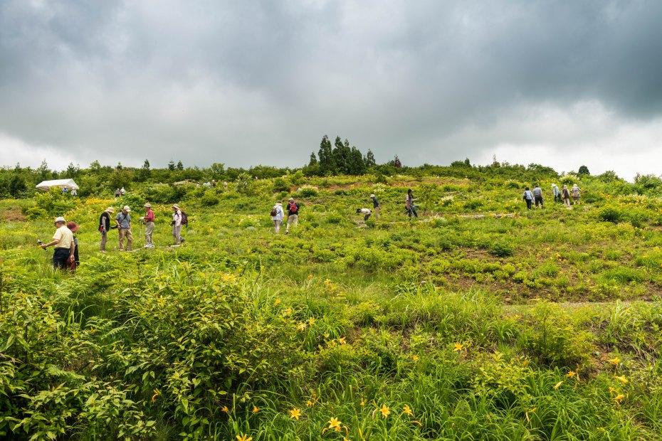 2015.06.22白山高山植物園11