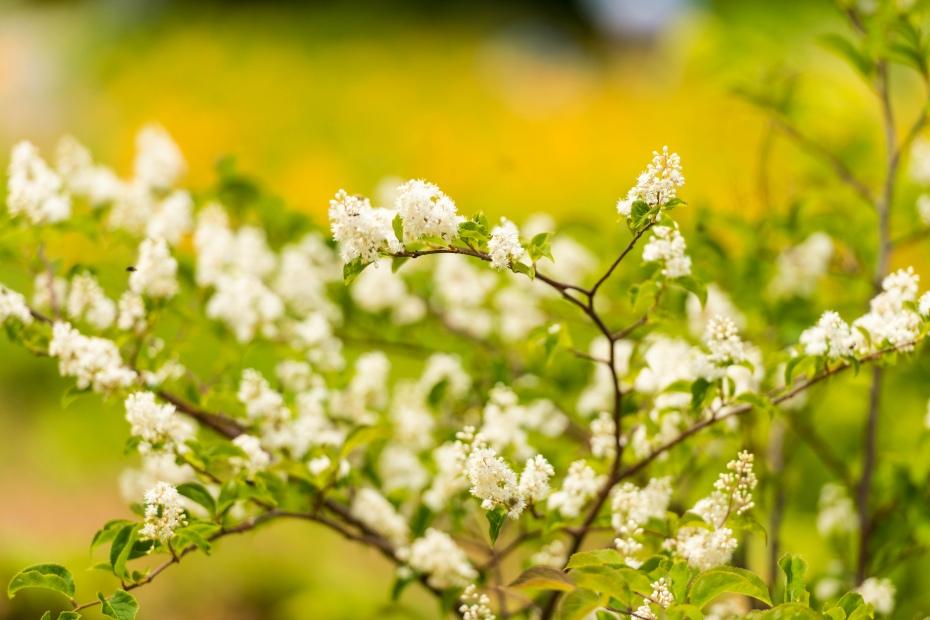 2015.06.22白山高山植物園10