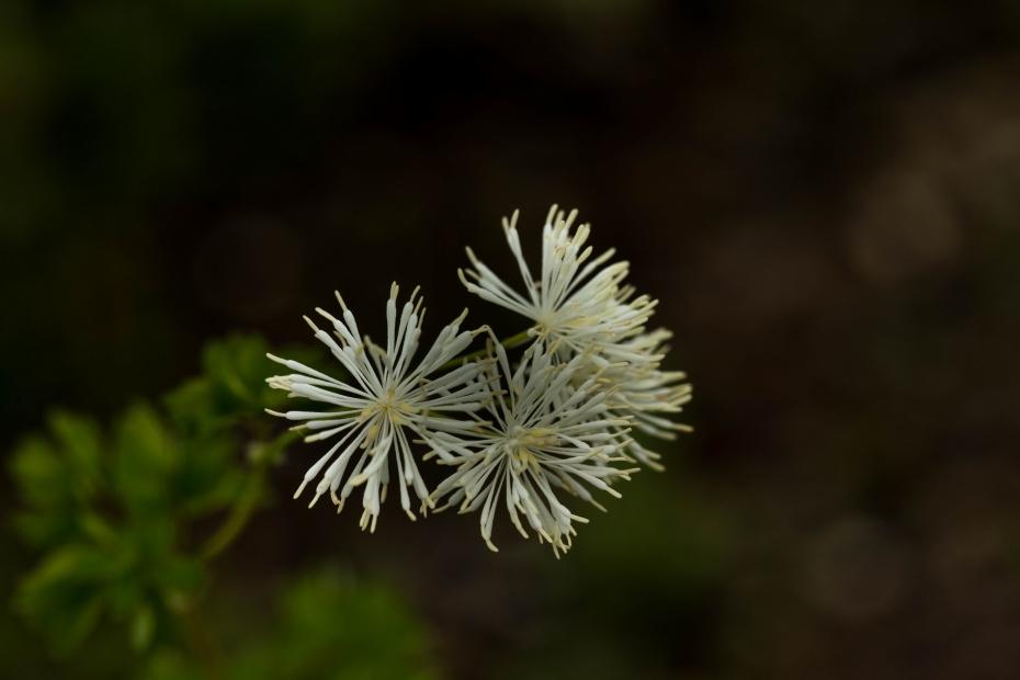 2015.06.22白山高山植物園8