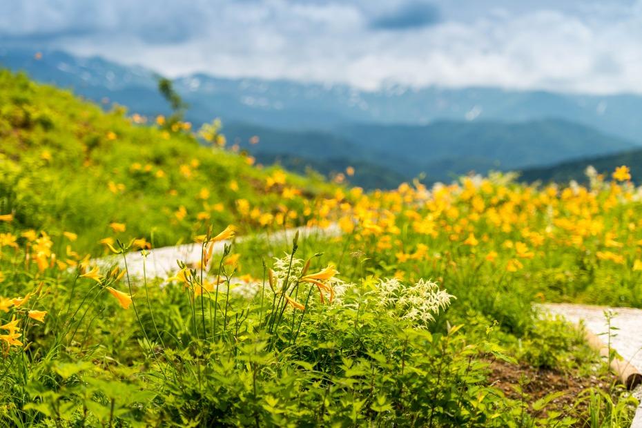 2015.06.22白山高山植物園2