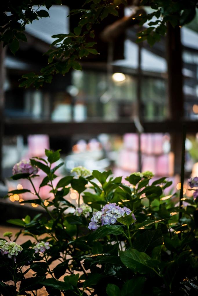 2015.06.27平等寺あじさい花灯り回廊11