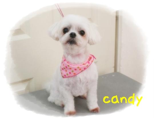 candy銭谷