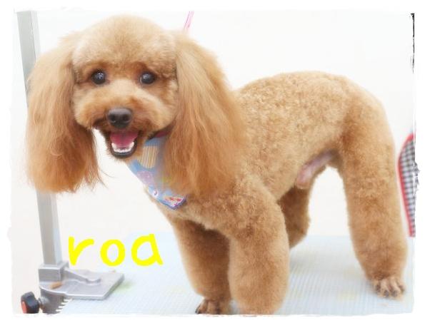 roa咲村