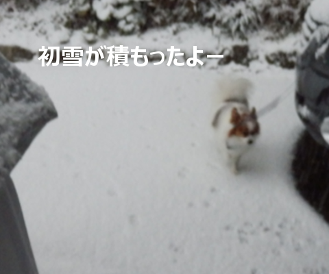 201501016.png