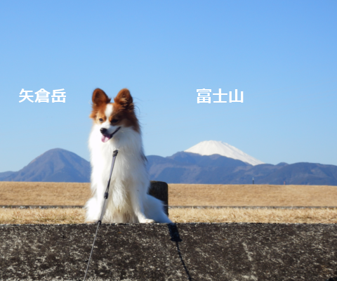 201501102.png