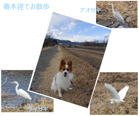 201501172.png