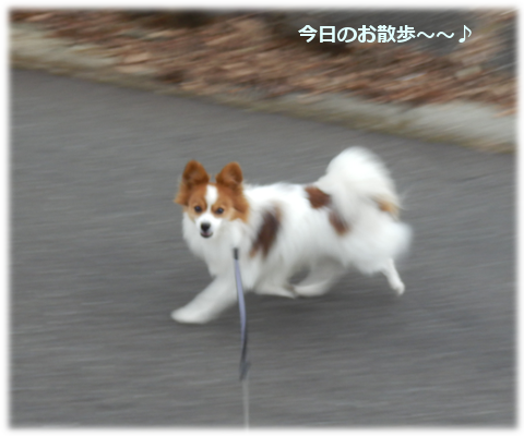 201501264.png