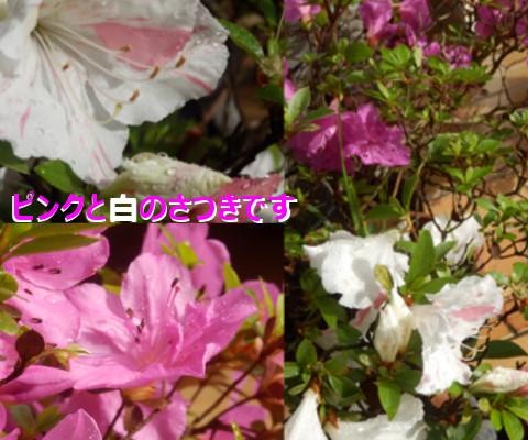 201506112.jpg