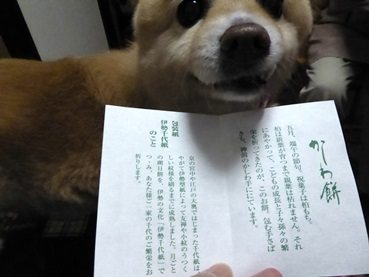 kashiwa150501_k.jpg