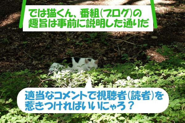 「では猫くん、番組(ブログ)の趣旨は事前に説明した通りだ」 適当なコメントで視聴者(読者)を惹きつければいいにゃろ?