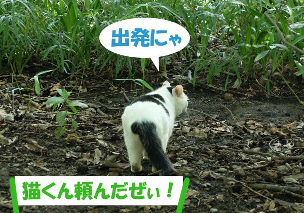 出発にゃ 「猫くん頼んだぜぃ!」