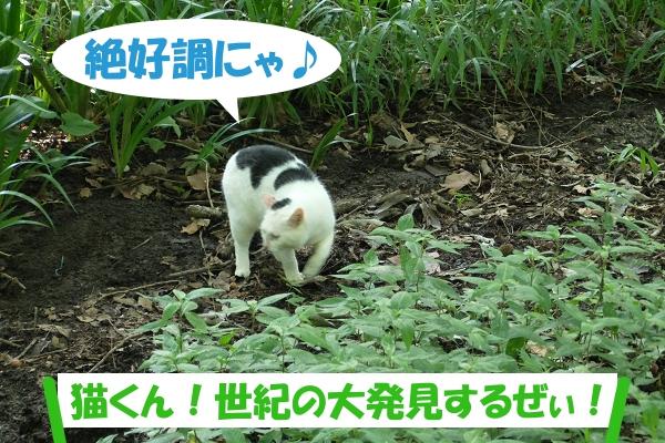 絶好調にゃ♪ 「猫くん!世紀の大発見するぜぃ!」