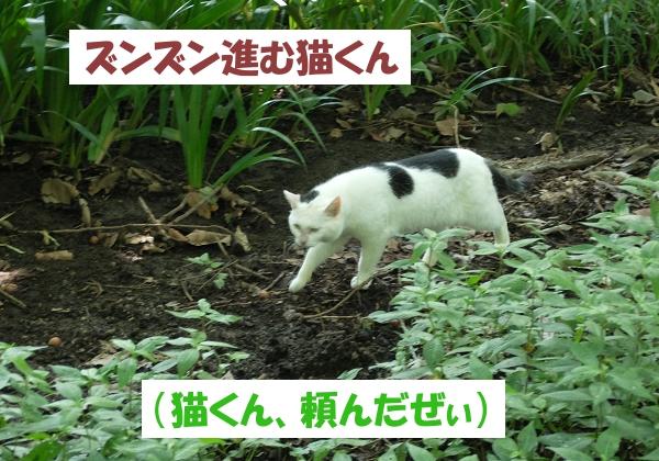 ズンズン進む猫くん (猫くん、頼んだぜぃ)