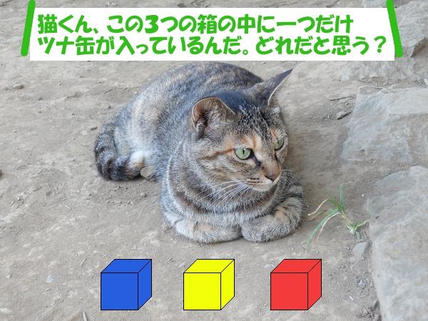 「猫くん、この3つの箱の中に一つだけツナ缶が入っているんだ。どれだと思う?」