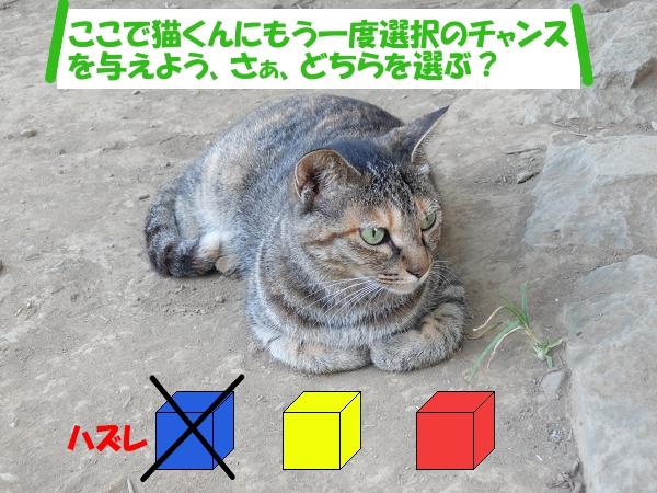 「ここで猫くんにもう一度選択のチャンスを与えよう、さぁ、どちらを選ぶ??」