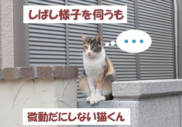 しばし様子を伺うも 微動だにしない猫くん